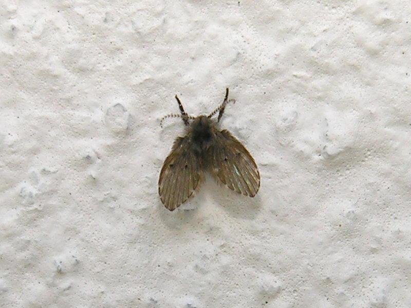 Что за насекомое ее